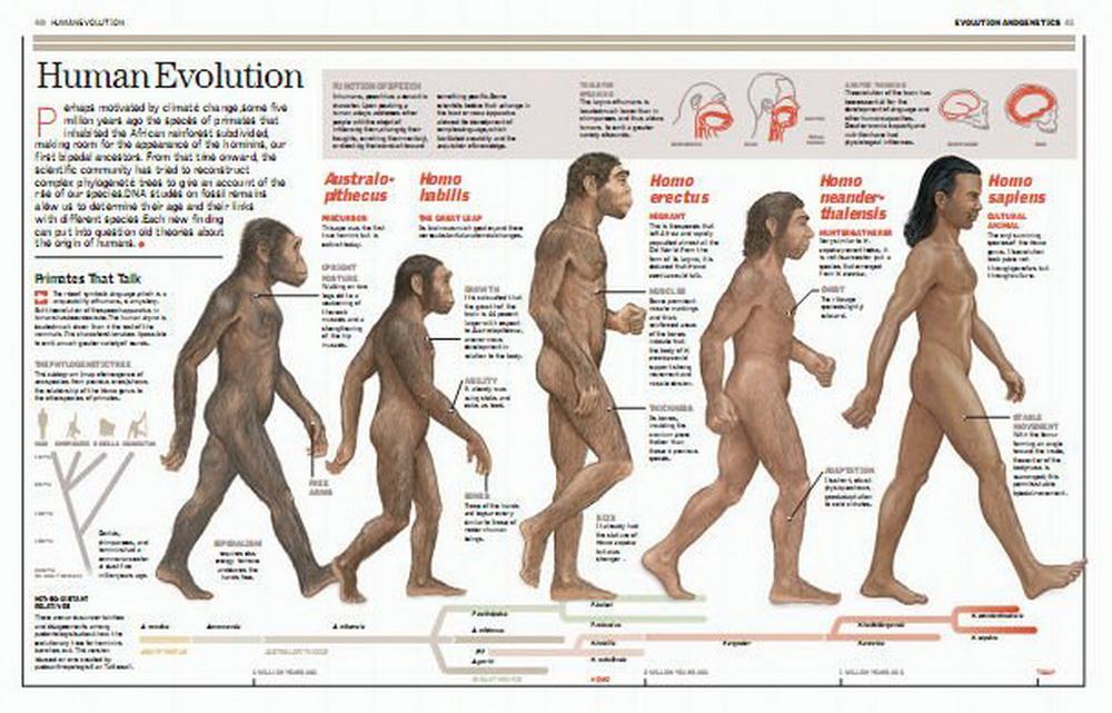 australopithecines vs homo essay